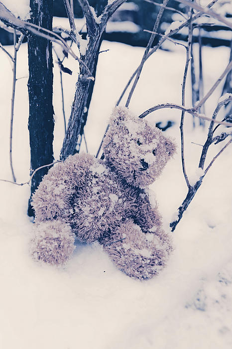 Teddy In Snow Print by Joana Kruse