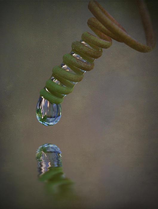 Tendril Droplet  Print by Kym Clarke