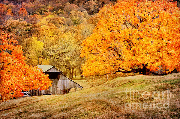 Tennessee Autumn Barn Print by Cheryl Davis