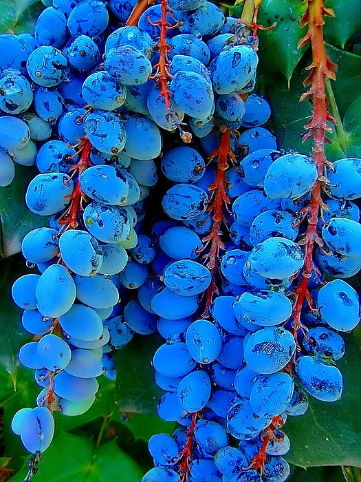 Texas Berries Photograph  - Texas Berries Fine Art Print