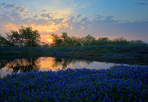 Mark Alder - Texas Bluebonnets