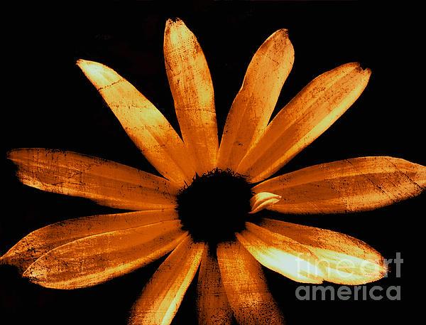 Ann Powell - Textured Daisy