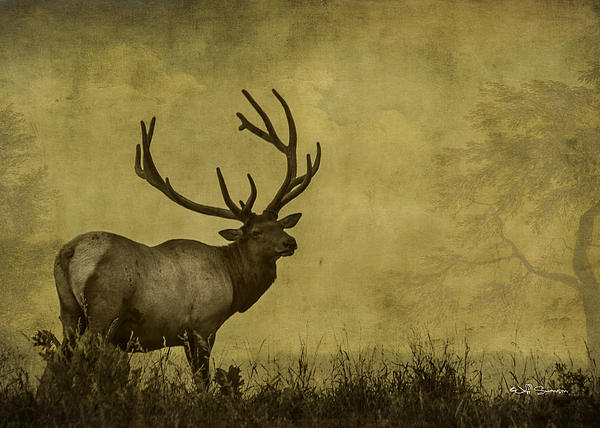 Jeff Swanson - Textured Elk