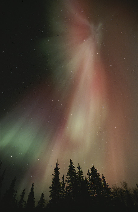 The Aurora Borealis Illuminates The Sky Print by Paul Nicklen
