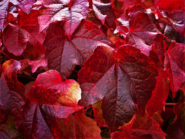 Lauren Melling - The Autumn Leaves
