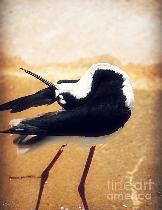The Ballerina Bird Print by Peggy  Franz