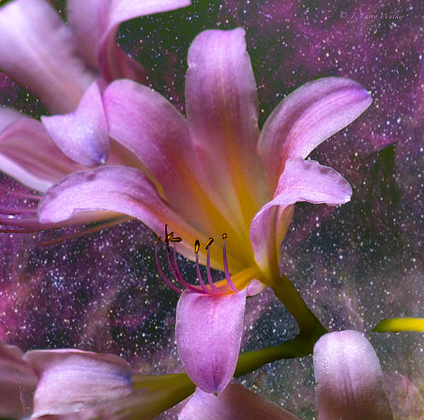 The Beauty Of Pollination Print by J Larry Walker