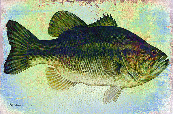 The Big Fish Print by Bill Cannon