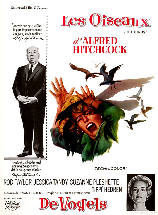 The Birds, Aka Alfred Hitchcocks The Print by Everett