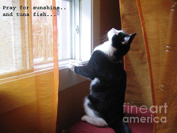 cat praying