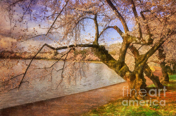 Lois Bryan - The Cherry Blossom Festival