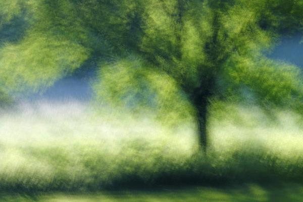 John Nandor - The Dreaming Tree