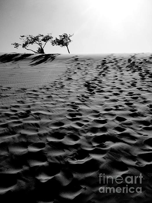 The Dunes At Dusk Print by Tara Turner