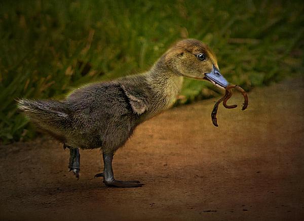 Anne Rodkin - The Early Bird