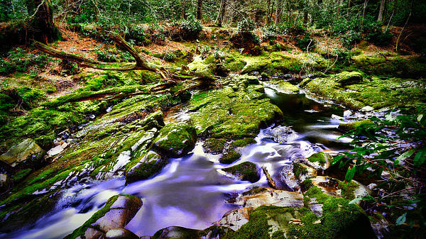 The Fairy Brook Print by Kim Shatwell-Irishphotographer