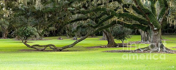 The Giving Tree Print by Scott Pellegrin