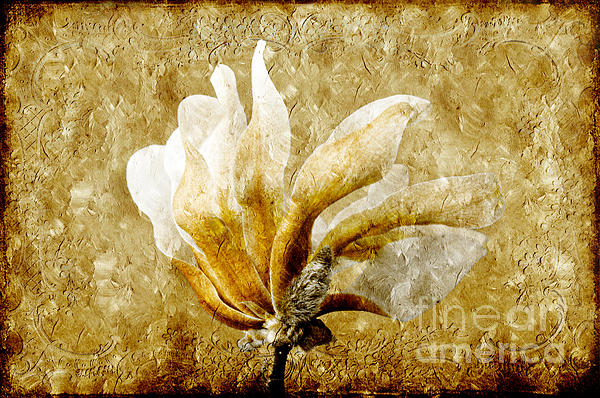 Andee Photography - The Golden Magnolia