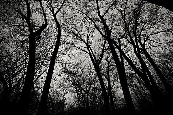 CJ Schmit - The Haunt of Winter
