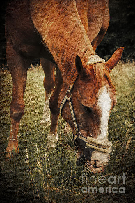 The Horse Print by Angela Doelling AD DESIGN Photo and PhotoArt