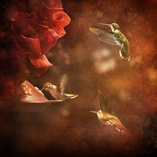 Cindy Singleton - The Hummingbird Feeder