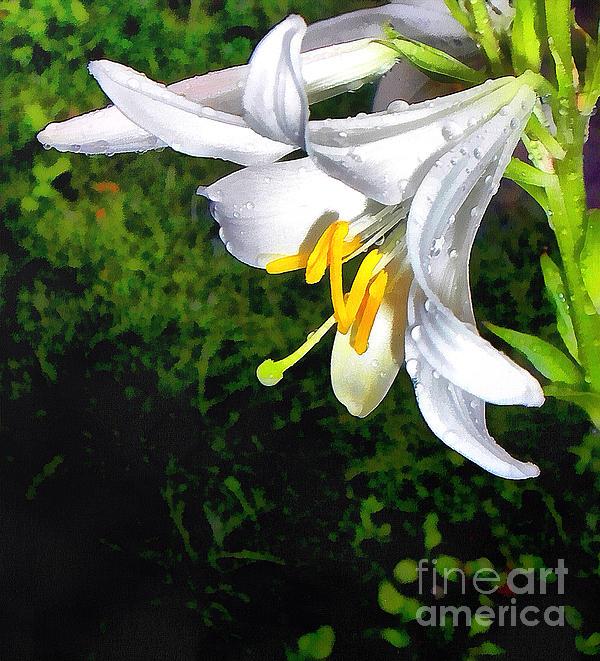 The Lily Print by Odon Czintos