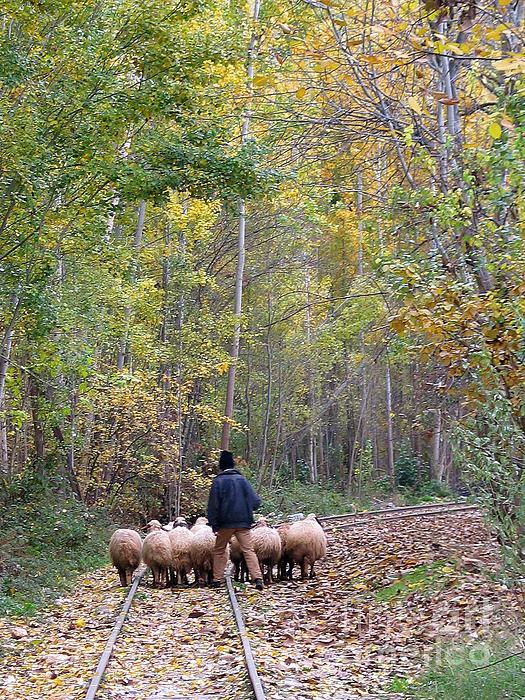 The Little Shepherd Print by Issam Hajjar