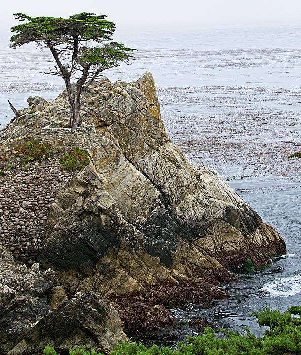 The Lone Cypress - California Print by Brendan Reals