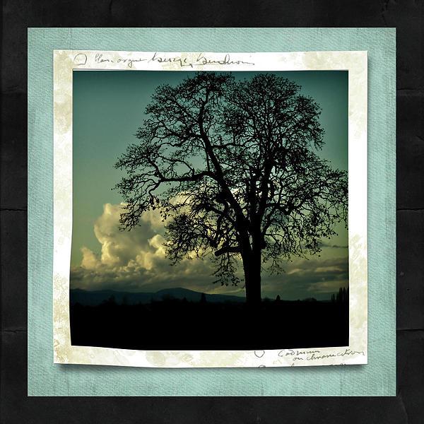 The Old Oak Print by Bonnie Bruno