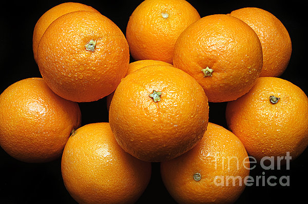 The Oranges Print by Andee Design