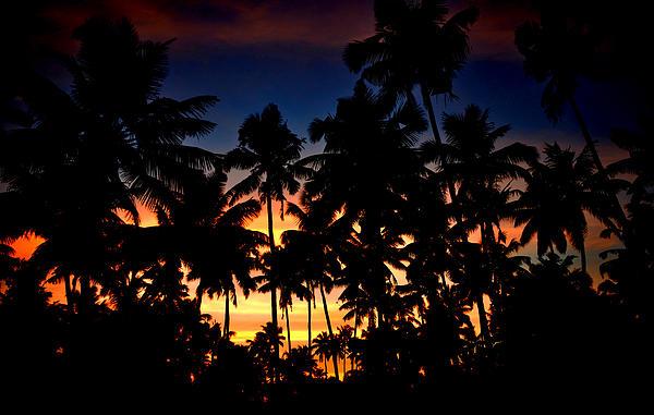 Farah Faizal - The Palm Jungle