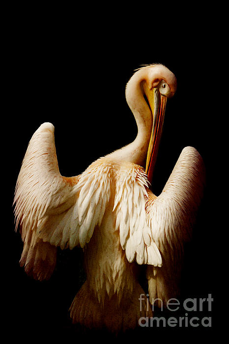 The Pelican Print by Angela Doelling AD DESIGN Photo and PhotoArt