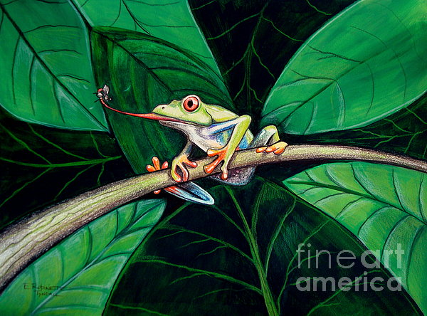 The Red Eyed Tree Frog Painting  - The Red Eyed Tree Frog Fine Art Print