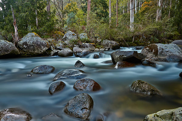 The River Wild Print by Mark Lucey