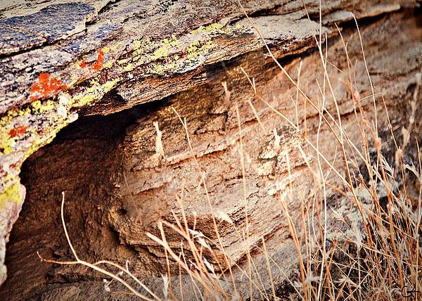 The Rock Print by Gilbert Artiaga