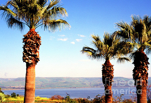 The Sea Of Galilee From The Mount Of The Beatitudes Print by Thomas R Fletcher