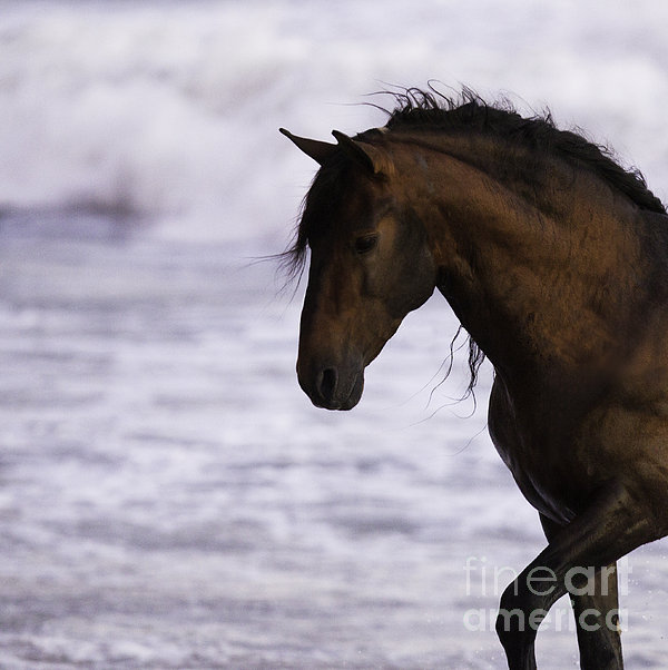 The Stallion And The Ocean Print by Carol Walker