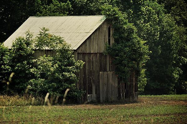 The Summer Barn Print by Rebecca Sherman
