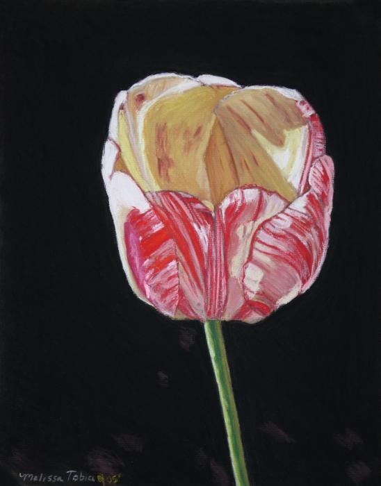 The Tulip Painting  - The Tulip Fine Art Print