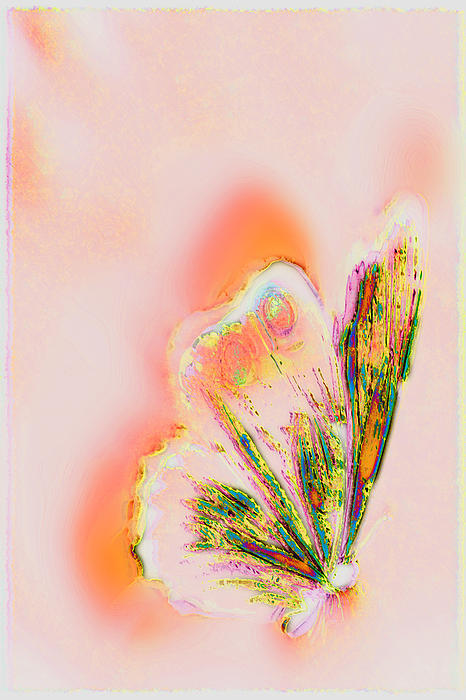 The Vibes Of A Butterfly's Mind Print by Li   van Saathoff