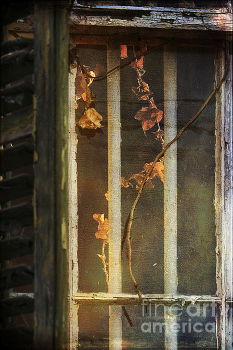 The Vine Inside Print by Sari Sauls