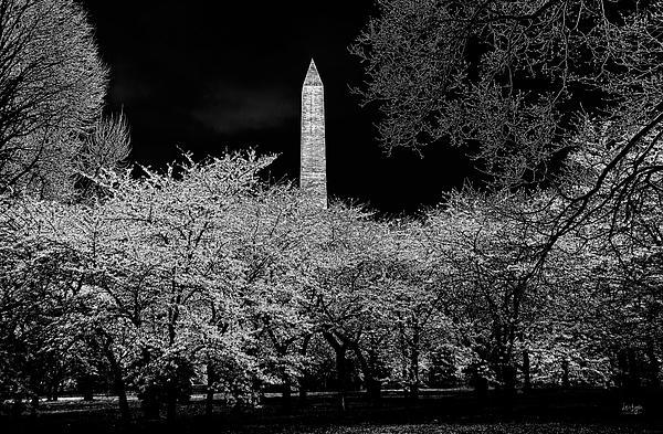 The Washington Monument At Night Print by Lois Bryan