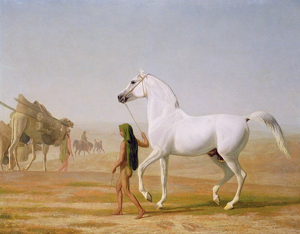 The Wellesley Grey Arabian Led Through The Desert Print by Jacques-Laurent Agasse