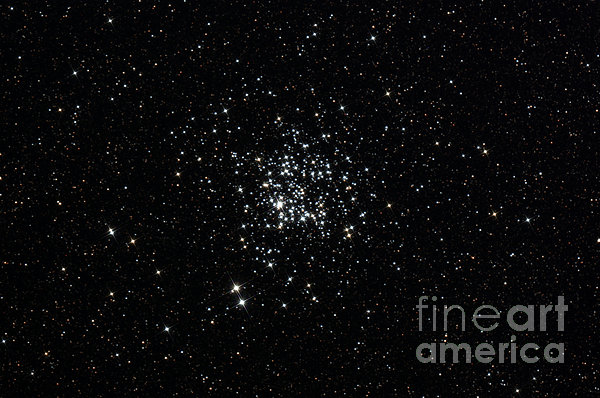 The Wild Duck Cluster Print by Rolf Geissinger