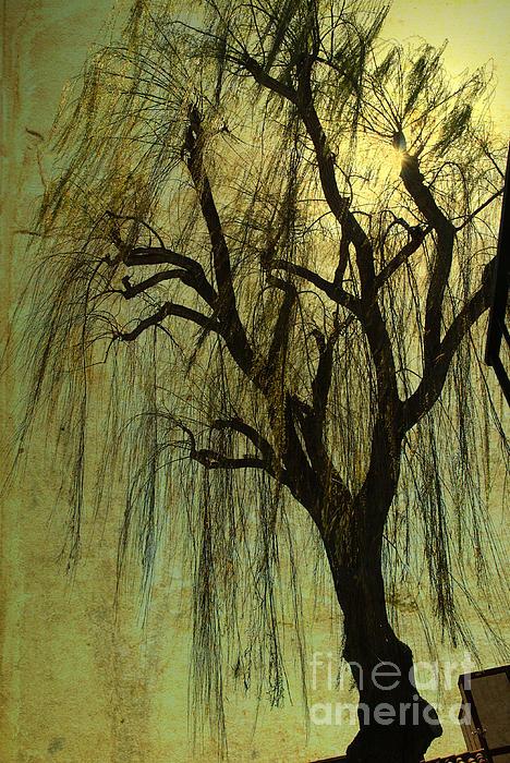 The Willow Tree Print by Susanne Van Hulst