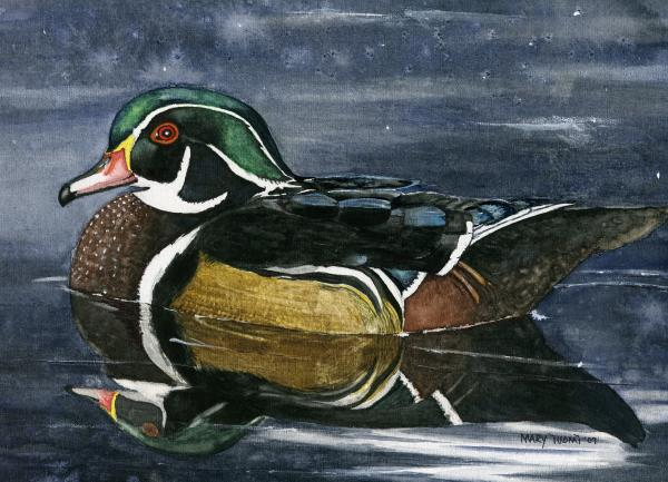 The Wood Duck Print by Mary Tuomi