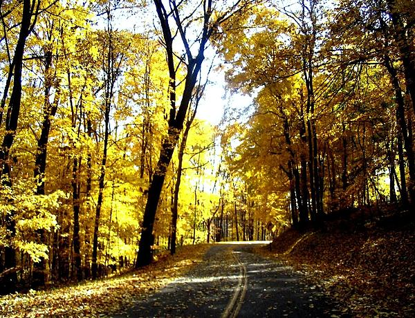 Spencer McKain - The Yellow Forest