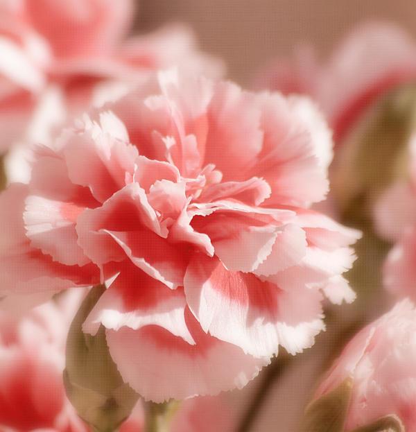 Kim Hojnacki - Think Pink