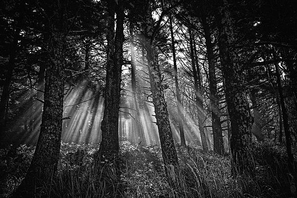 This Is Our World - No.1 - Forest Floor Morning Mist Bw Print by Paul W Sharpe Aka Wizard of Wonders
