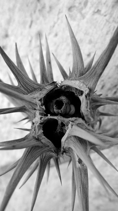 Thorn Tres Print by Skip Hunt