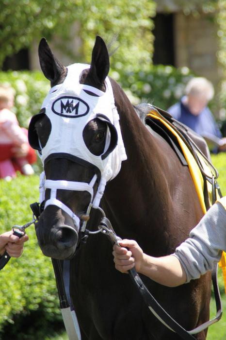 Thoroughbred Before Keeneland Race Photograph